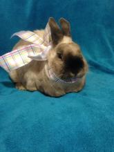 spayed bunny rabbit for adoption