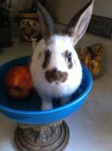 baby femal bunny rabbit